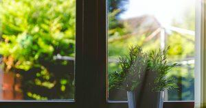 finestra chiusa con pianta e vista sul verde